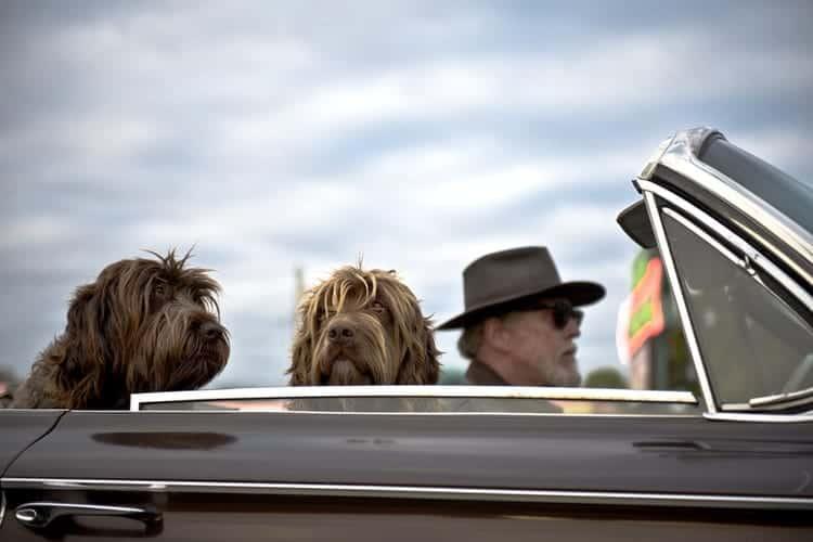 Fahrsicherheit: mit dem Hund im Auto
