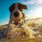 Stressfreies Reisen im Urlaub mit Hund