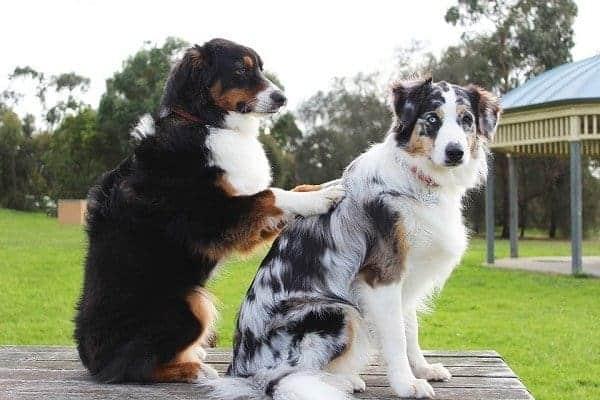 Ausbildung zum Hundemasseur