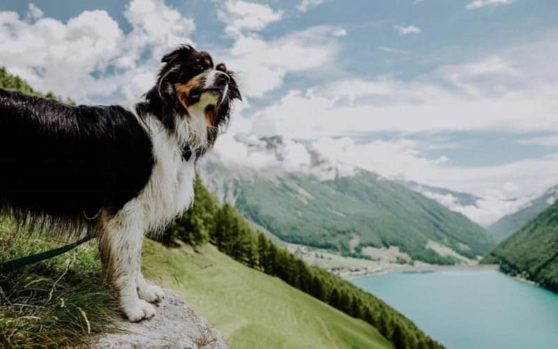 Wanderhotel Vinschgerhof pfotencheck urlaub mit hund