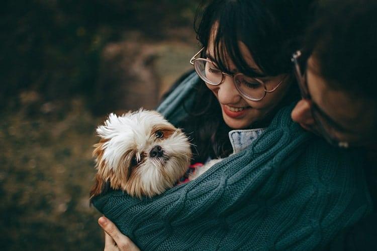 Hundeliebe in den Genen verankert Foto: © Pexels