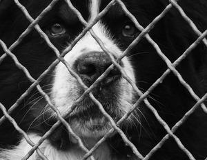 Tierpension wartet auf fehlende Zahlungen