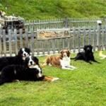 urlaub mit hund österreich kitzbüheler alpen tirol hundeparadies müllneralm