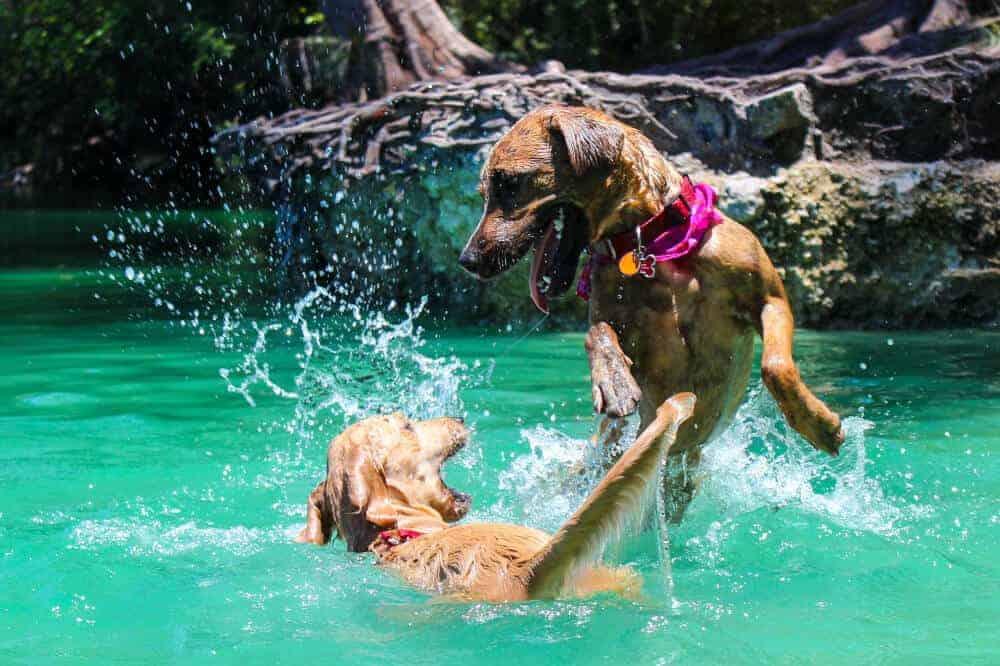 hunde spielen wasser natur
