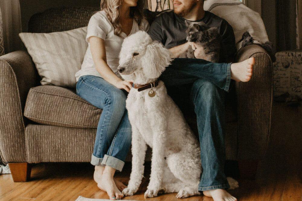 Wie Geht Petting
