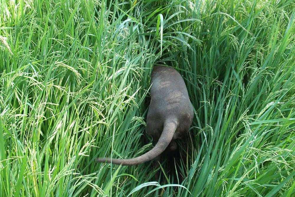 nasenarbeit schnüffeln hund beschäftigen natur jagd
