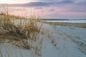 urlaub norddeutschland mit hund an die ostsee sand strand hundefreundlich duenen meer