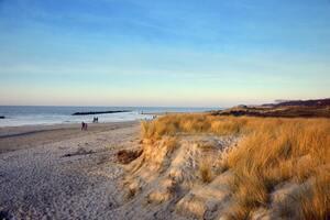 urlaub norddeutschland mit hund an die ostsee sand strand hundefreundlich duenen stimmung blauer himmel meer