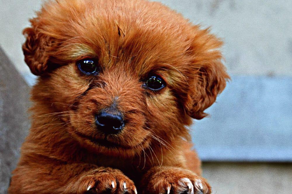 Hund und frau machen liebe