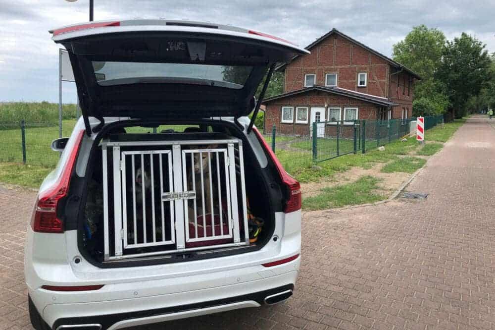 Volvo XC 60 hund hundefreundlich berner sennenhund podenco hundebox kofferraum