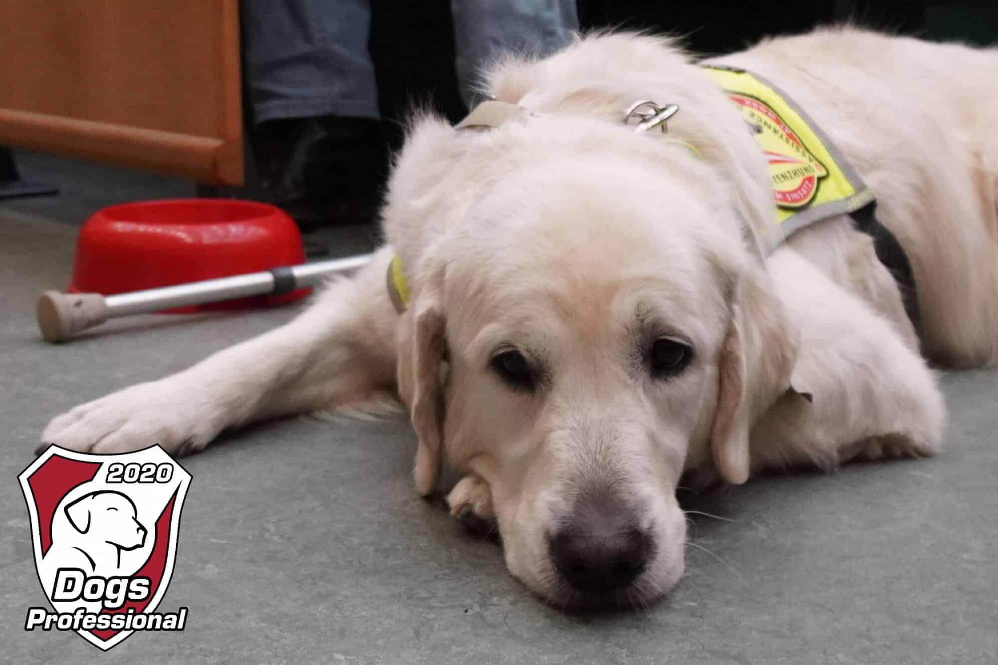 dogs professional 2020 hundetrainerkongress samstag 41