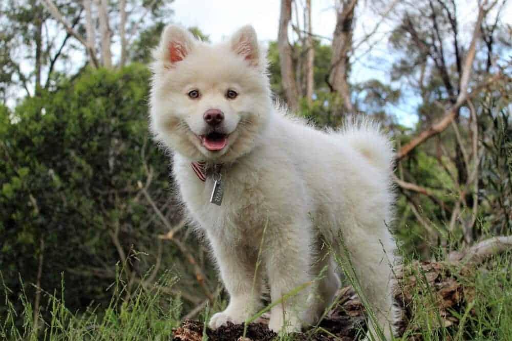 hund welpe schwanz wedeln koerpersprache