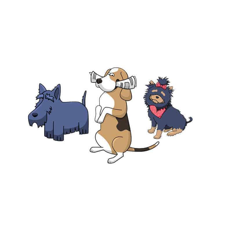 quiz koerpersprache hund fragen alle richtig die hundezeitung