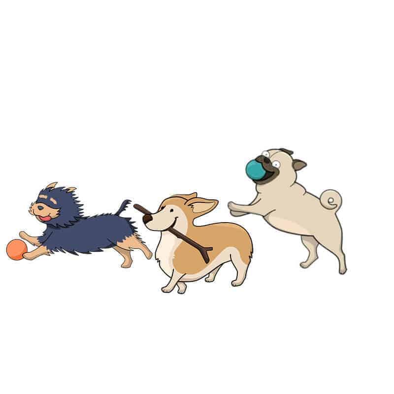quiz koerpersprache hund fragen fast alle richtig die hundezeitung