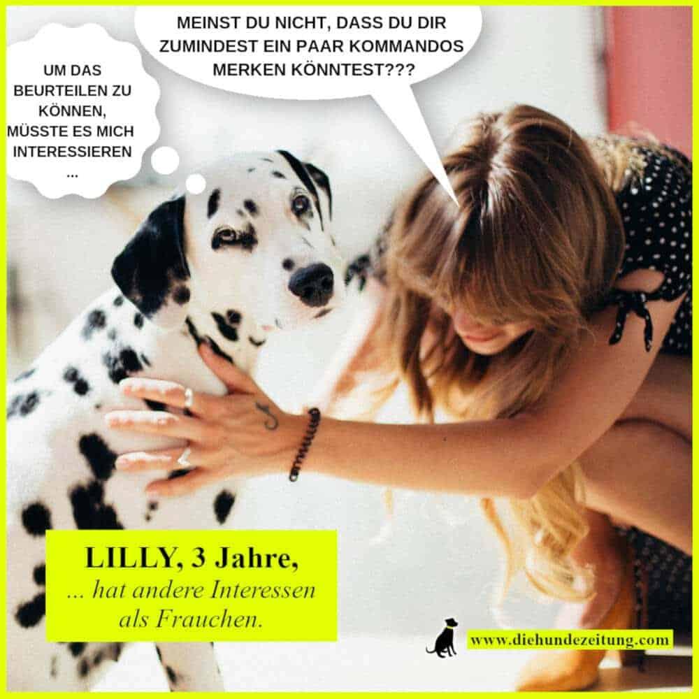 lustige sprüche hunde dalmatiner frauchen die hundezeitung