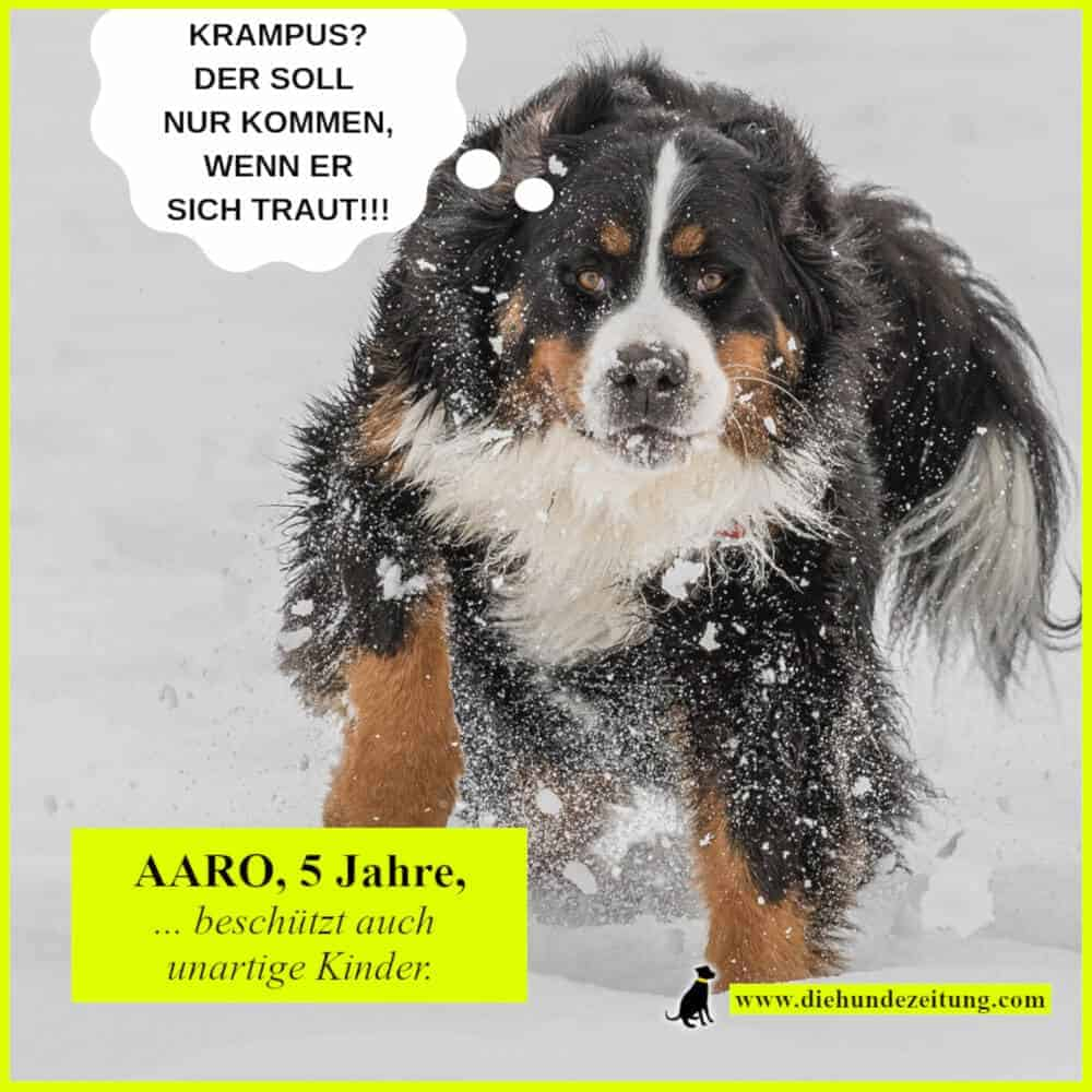 lustige sprüche hunde die hundezeitung berner sennenhund krampus winter schnee ruede