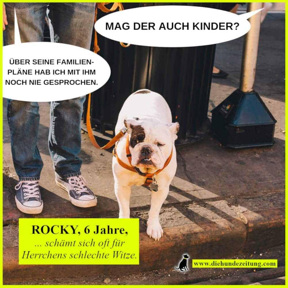 lustige sprüche hunde die hundezeitung bulldogge
