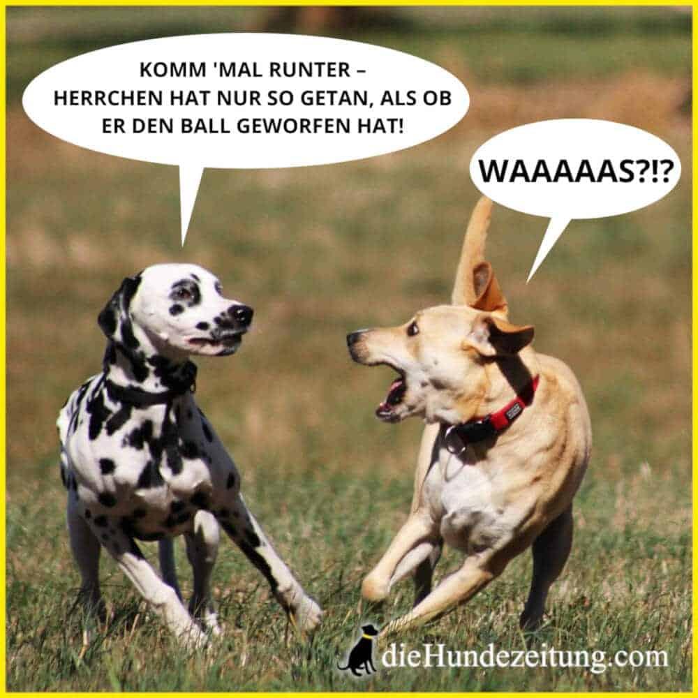 lustige sprüche hunde die hundezeitung dalmatiner hundewiese ball spielen