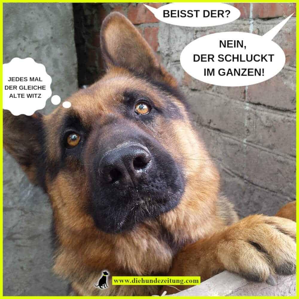 lustige sprüche hunde die hundezeitung deutscher schäferhund beissen