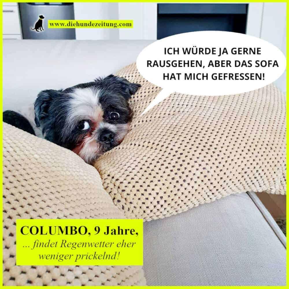 lustige sprüche hunde die hundezeitung faul couch regen wetter haustier