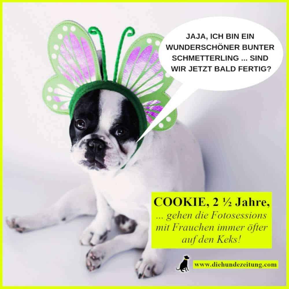 lustige sprueche hunde die hundezeitung französische bulldogge schmetterling