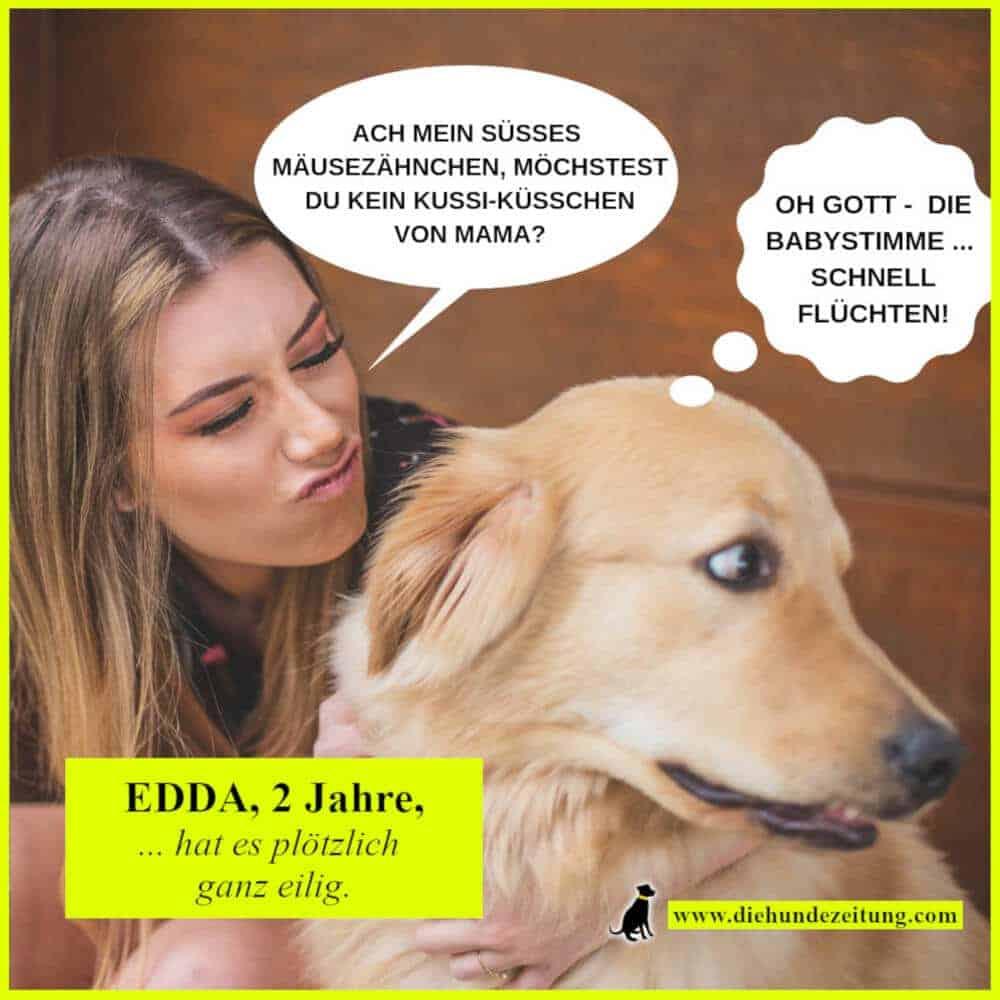 lustige sprüche hunde die hundezeitung golden retriever babystimme frauchen