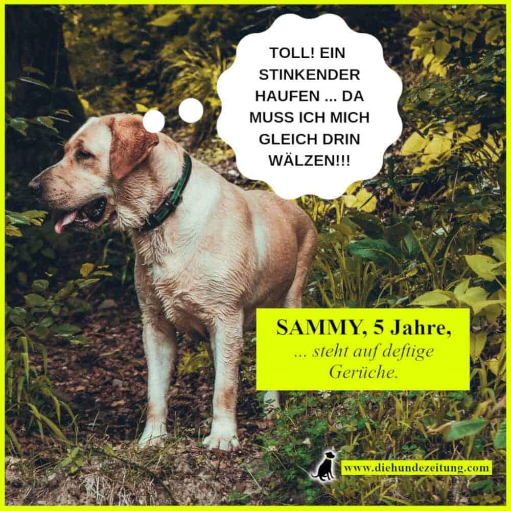 lustige sprüche hunde die hundezeitung labrador retriever stinken