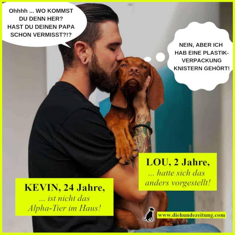 lustige sprüche hunde die hundezeitung magyar vizsla herrchen kuss