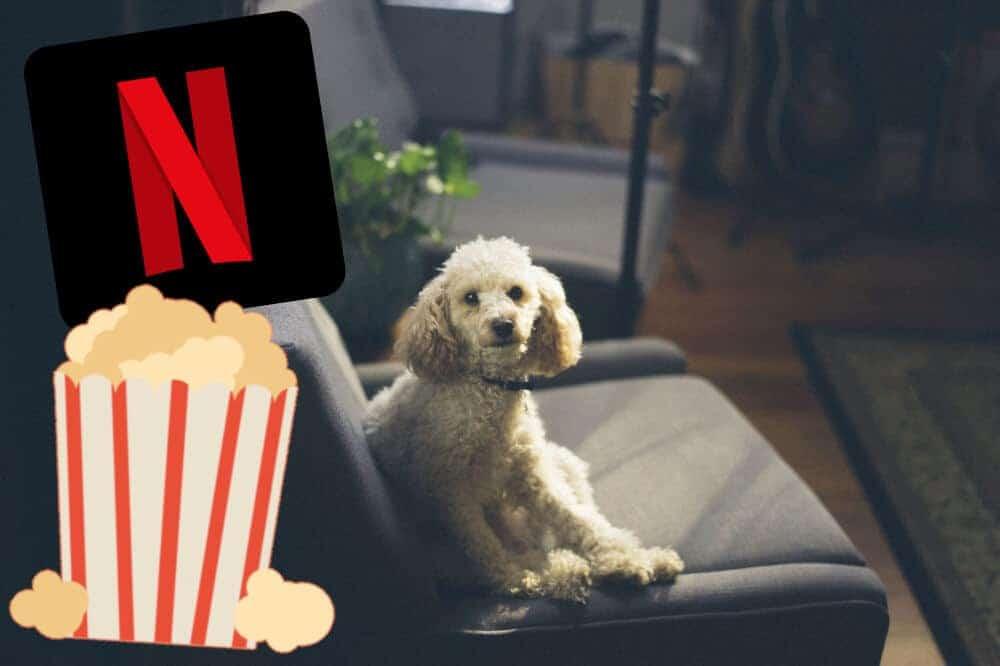 Serien Und Filme Auf Netflix
