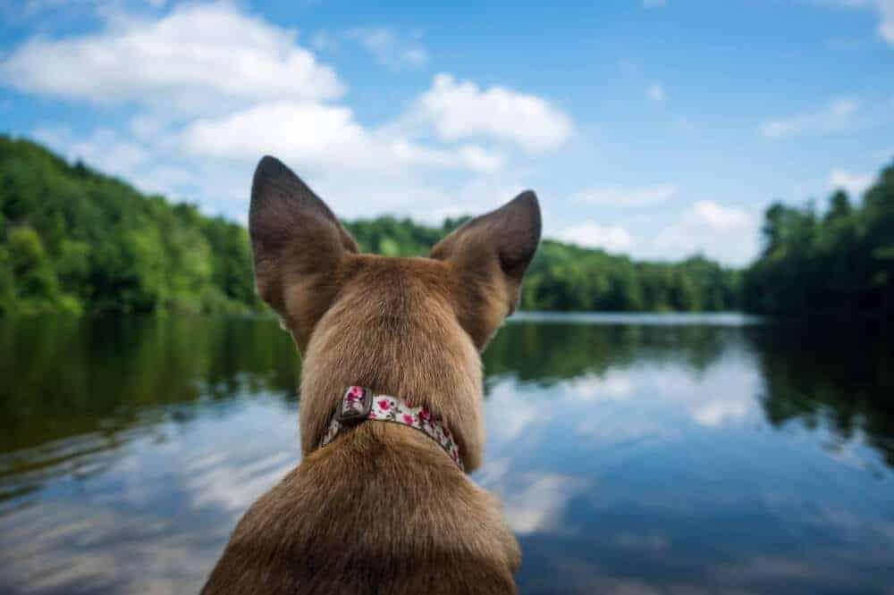 Schwimmen Mit Hund Hessen