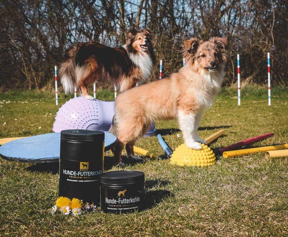 charline hunde futterkohle shetland sheepdog agility