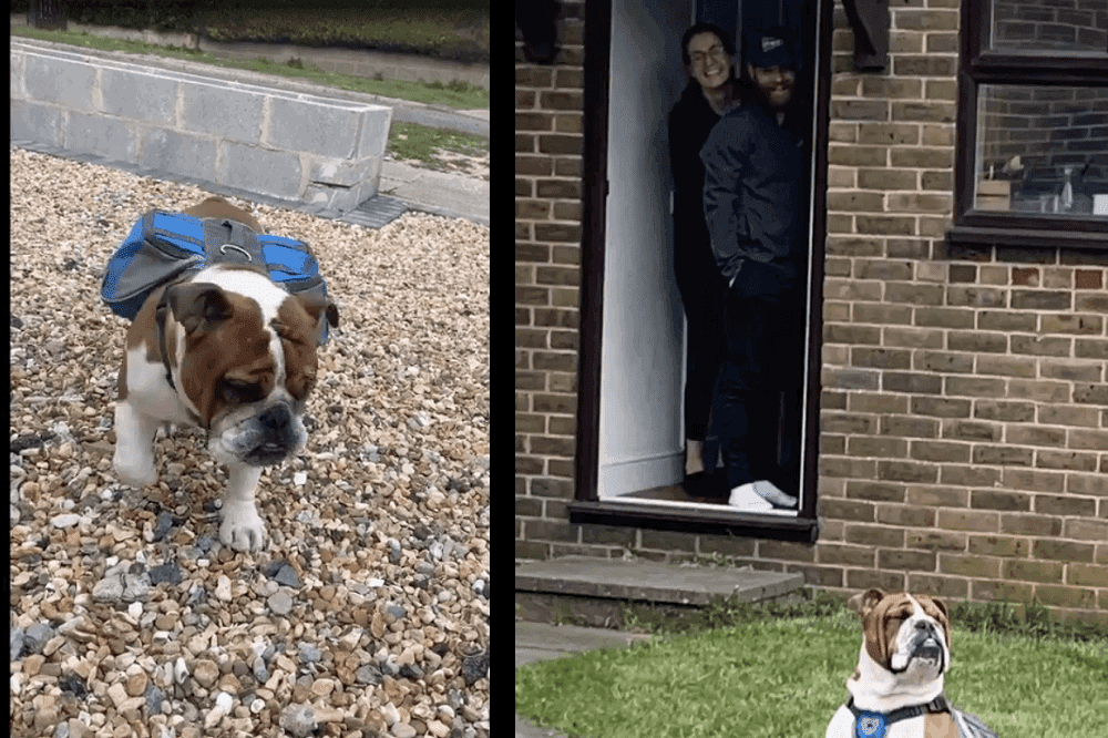 england hund kekse sheldon lieferung corona 2020