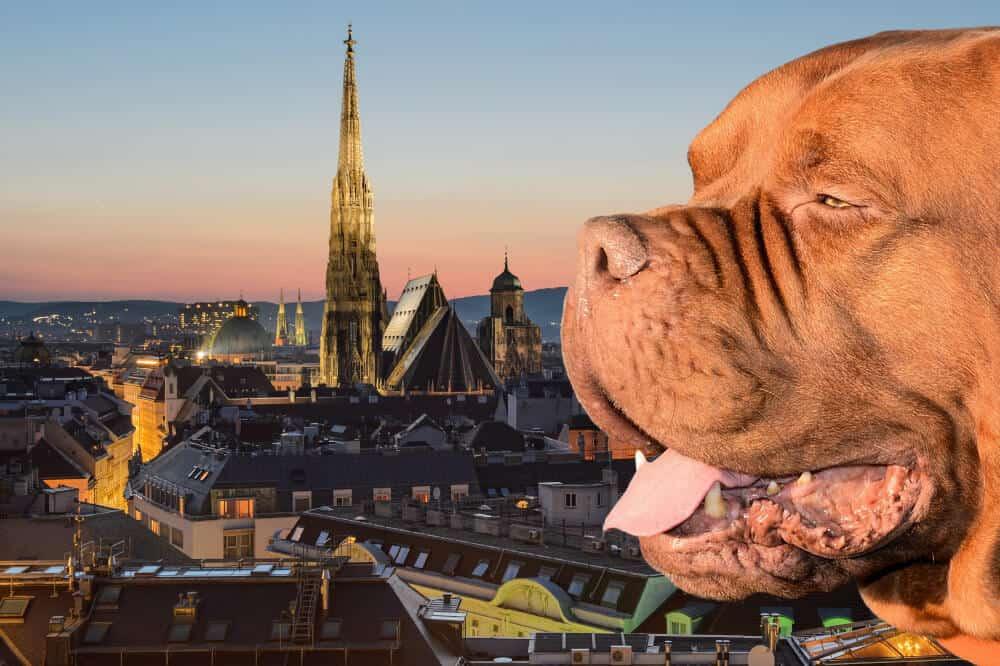 Hundefuhrerschein Osterreich Bestimmungen Nach Bundeslandern