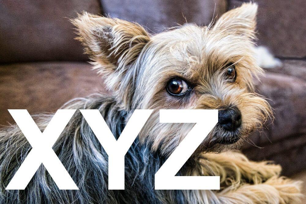 hunderassen mit x y z alphabetisch liste fci yorkshire terrier