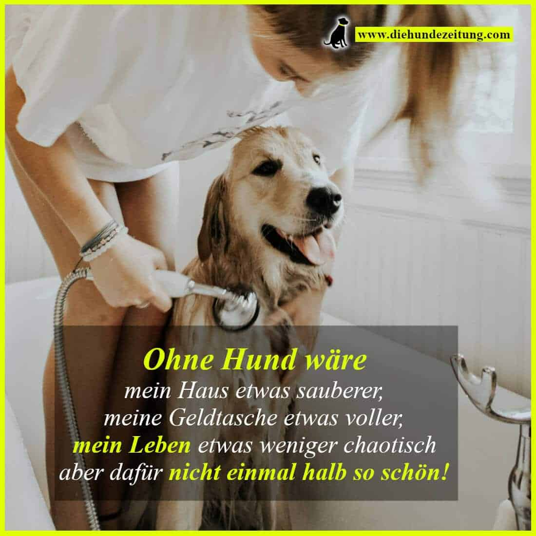 Hund Ohne Papiere