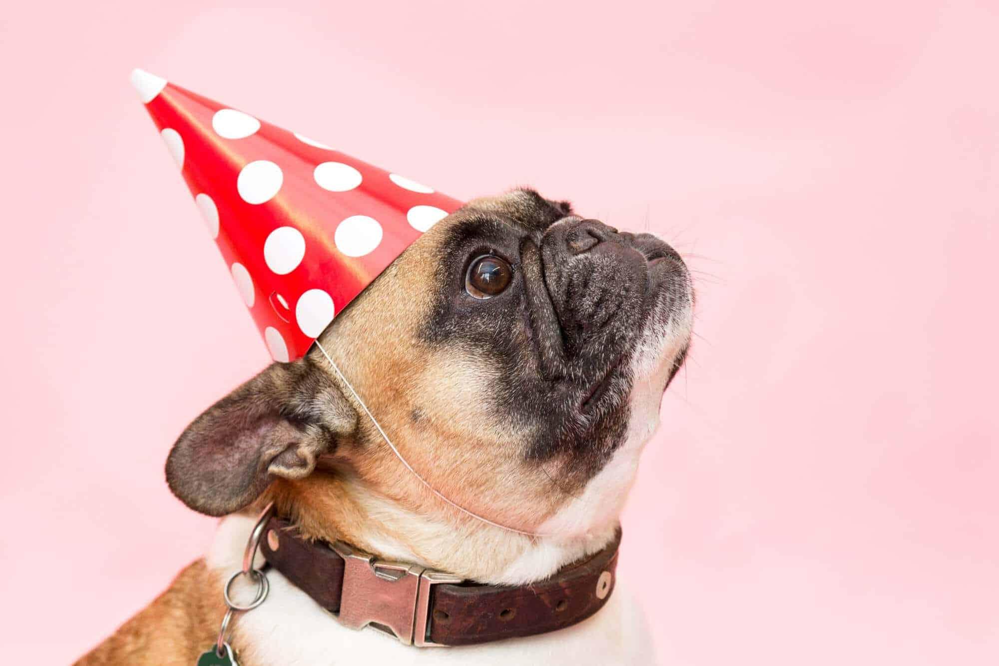 bekommen eure hunde ein geburtstagsgeschenk umfrage