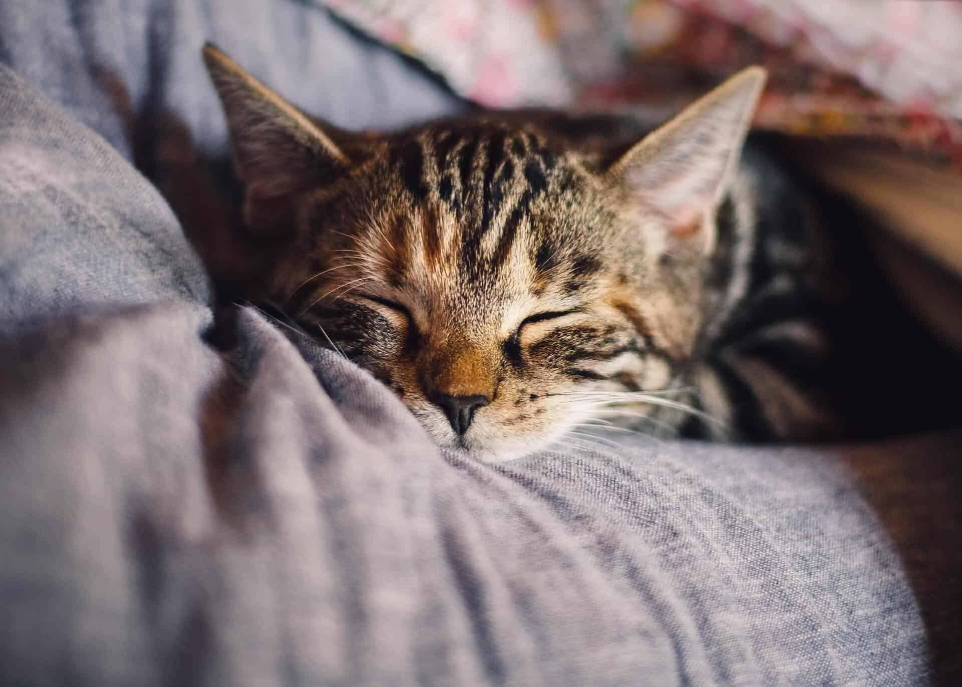 hundemenschen katzen umfrage