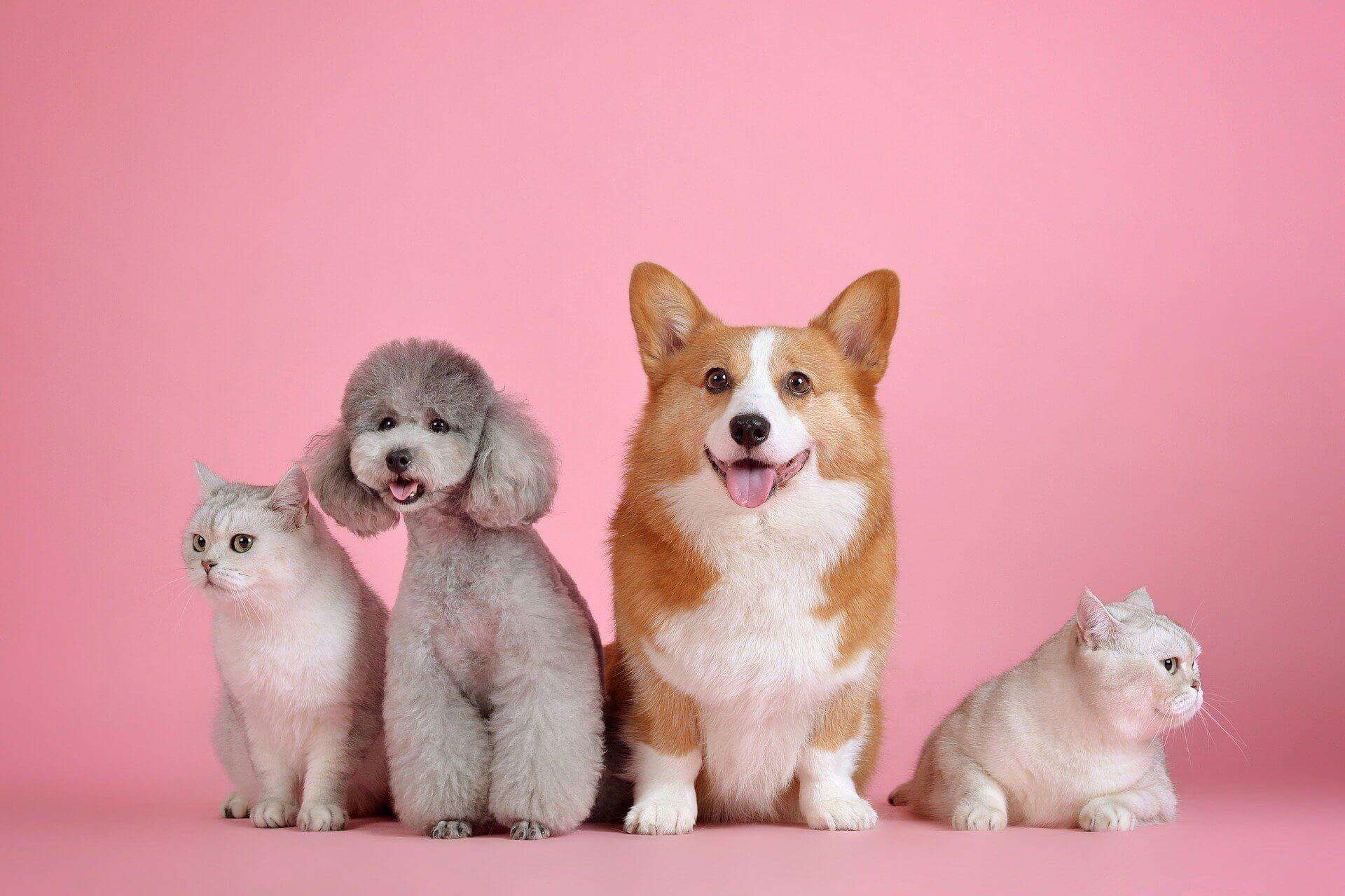 vertragen sich eure hunde mit anderen haus tieren