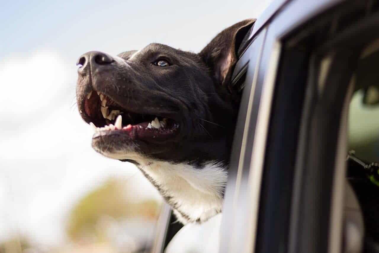 hund listenhunde hunderasse schweiz rasseliste gesetz