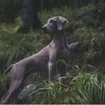 Pseudowut beim Hund Krankheit Ursache Symptome