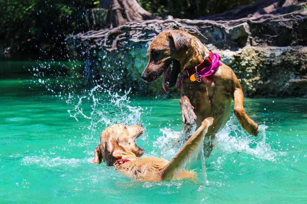 Wenn Hunde schwimmen worauf man achten muss
