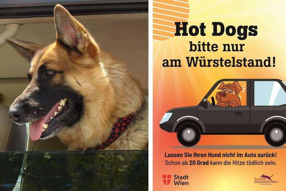 Hunde Im Auto Lassen