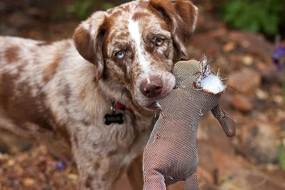 verreisen mit hund schaden