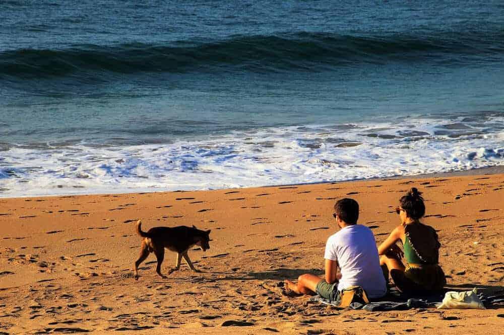 verreisen mit hund strand meer