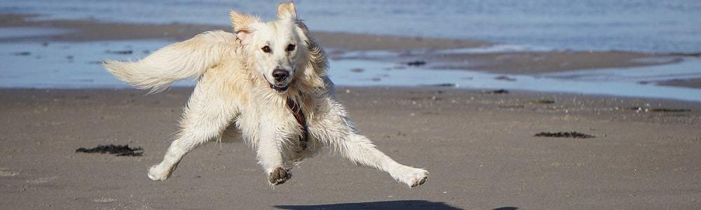 fci gruppen hund gruppe rassennomenklatur rasse hunderasse zucht retriever apportierhund