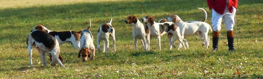 fci gruppen hunderasse hund rassennomenklatur rasse breed laufhund