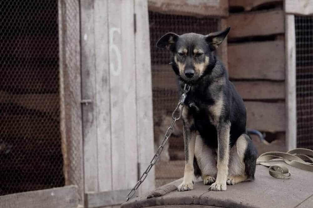 hund hundeverordnung bundeslandwirtschaftsministerium neu gesetz entwurf deutschland