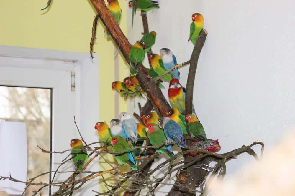 animal-hoarding-fälle deutschland ziervögel