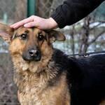 kimba tierheim adoption zurückgebracht polen krakau