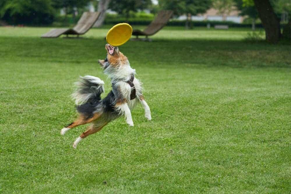cbd vital nahrungsergänzer aktiver hund sanfte alternativen für hunde hanf